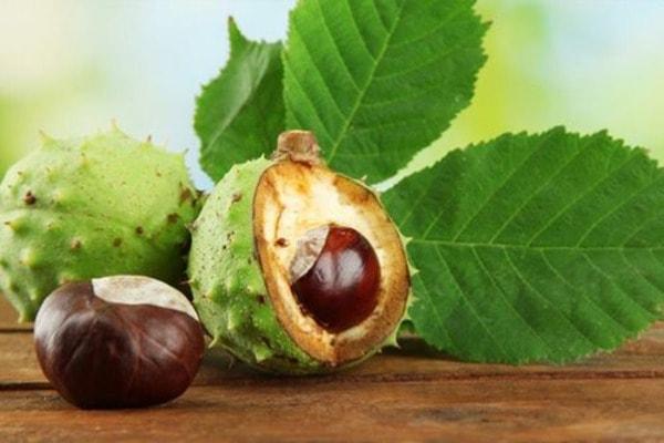 Экстракт каштана - натуральный препарат при варикозном расширении вен и геморрое